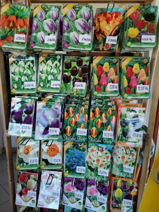 Minőségi holland virághagymák